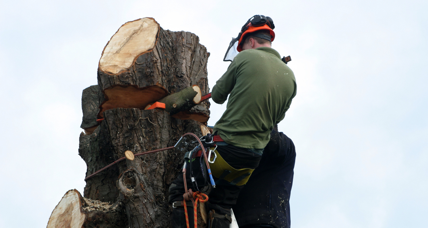 How to sectionally dismantle a tree - LJX