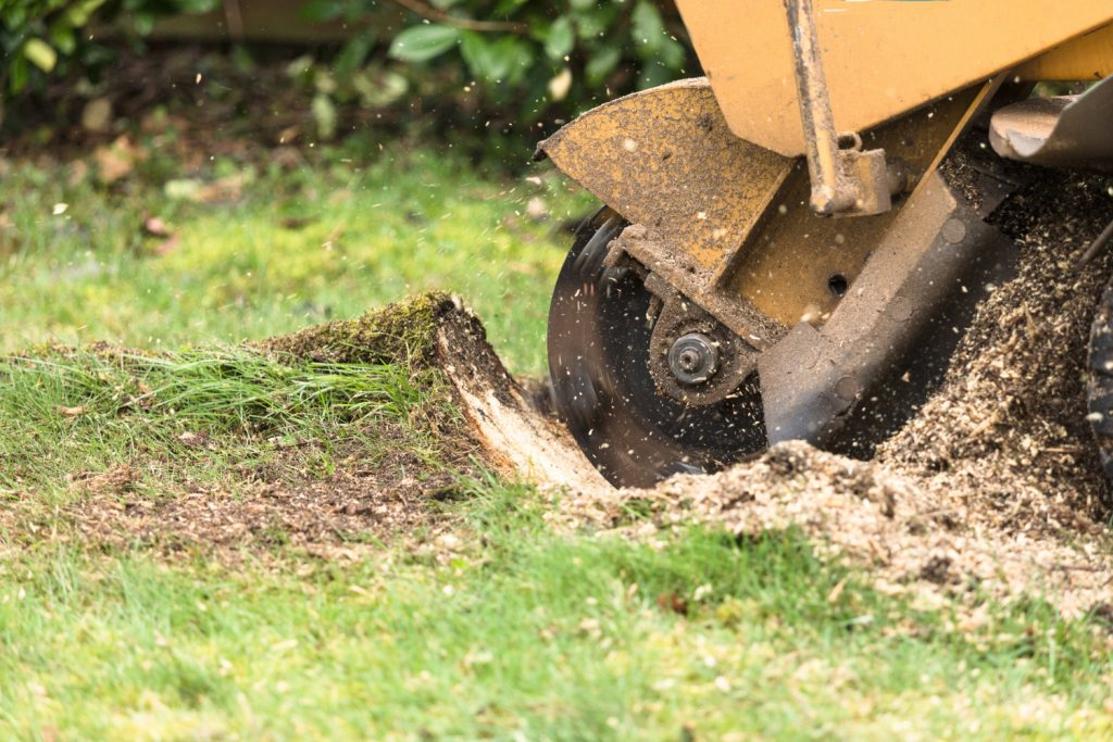 How much it cost to remove a tree stump - blog by LJX Tree Surgeons